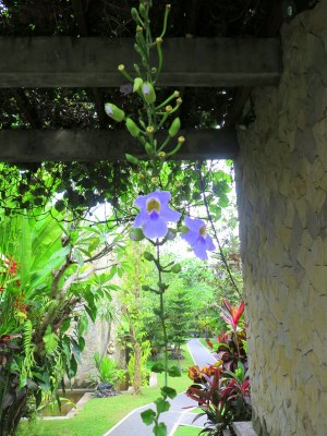 Blissfull Bali danyellekelly.com